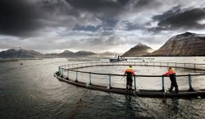 funningsfjoerður-a-71
